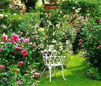 фото Розы - сад одного цветка, розарий