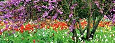 сад одного цветка - фото
