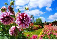 Многолетние садовые цветы в ландшафте дачи.