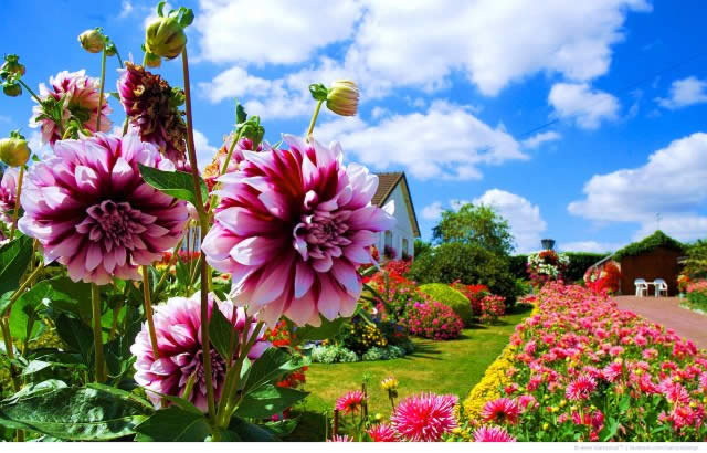 Многолетние садовые цветы для сада и дачи — фото и названия.