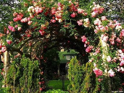 Строительство деревянной перголы для роз своими руками.