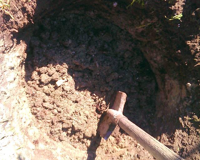 Посадка винограда весной саженцами – готовим посадочную яму - фото