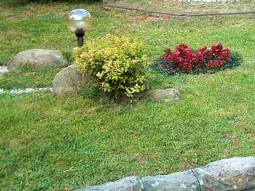 газон в саду фото