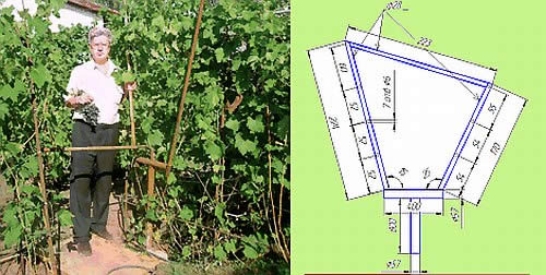 Шпалера для винограда своими руками – фото и чертежи