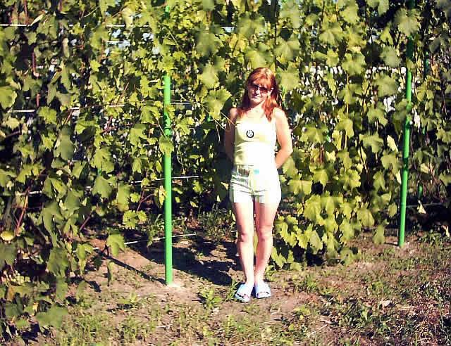 Одноплоскостная шпалера для винограда - фото