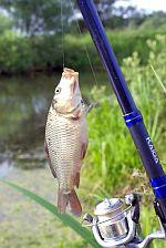 рыбная ловля карася