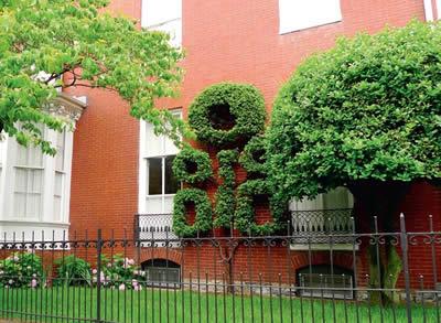 Ландшафтный дизайн при вертикальном озеленении