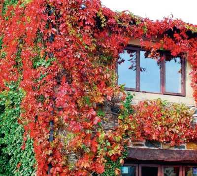 вертикальное озеленение стен - фото
