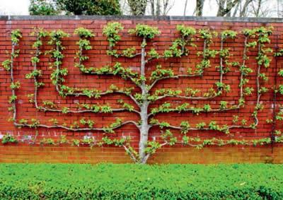 вертикальное озеленение стен в саду, фото