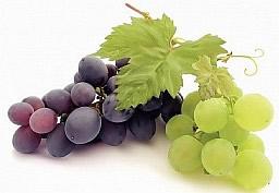 Выращивание винограда на перголе или беседке
