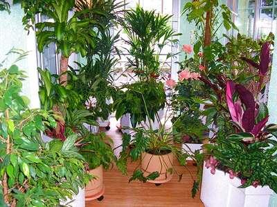 Зимний сад, сочетание обычных растений с тропическими - фото