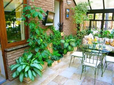 зимний сад в квартире - фото