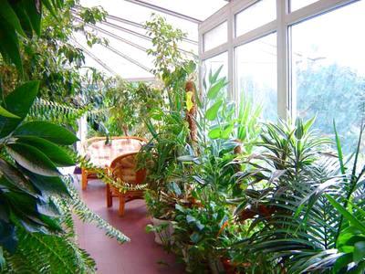 зимний сад в квартире на лоджии - фото